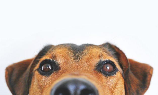 Comment soulager son chien qui se gratte?