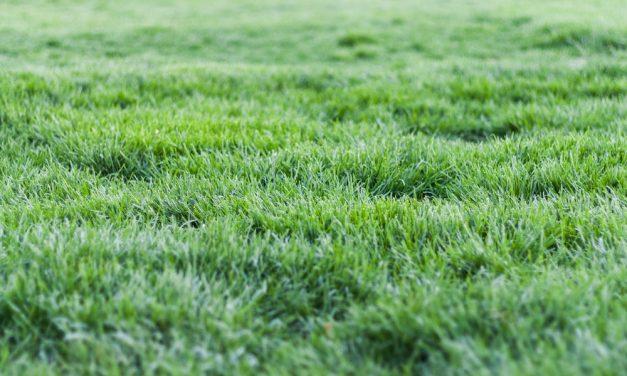 Comment se débarrasser des mauvaises herbes dans son jardin?